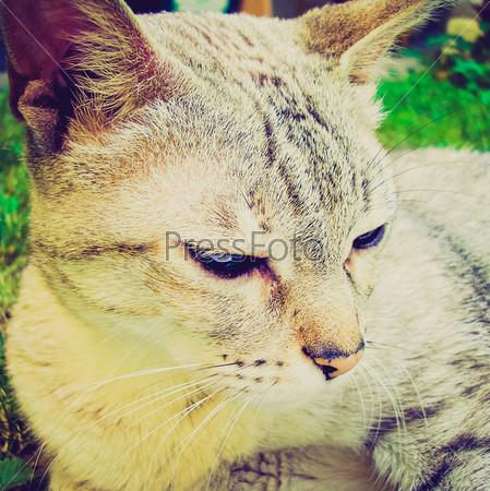 Фотография на тему Домашняя кошка крупным планом