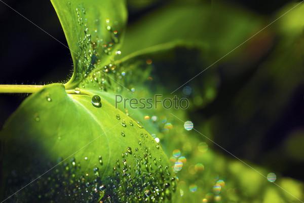 Фотография на тему Капля росы