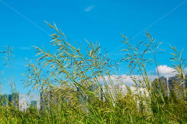 Фотография на тему Зеленая трава на фоне голубого неба