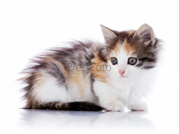 Фотография на тему Разноцветный котенок