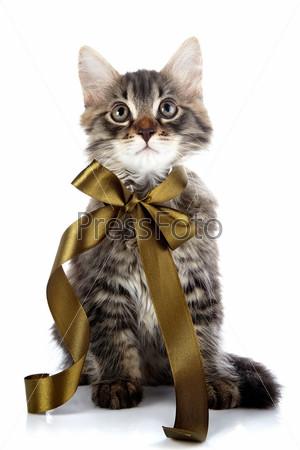 Полосатый пушистый кот с бантиком
