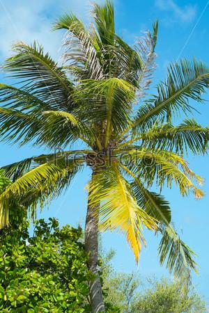 Пальмовые деревья на фоне неба
