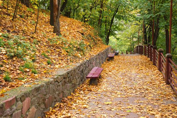 Фотография на тему Скамьи в осеннем парке