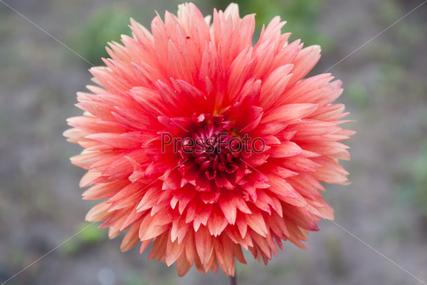 Фотография на тему Цветок