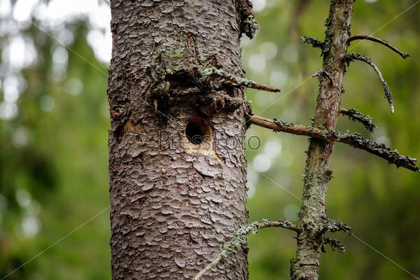Дупло в стволе дерева