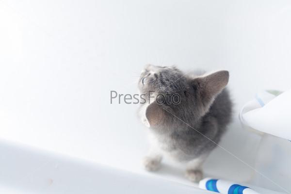 Серый котенок на белом фоне