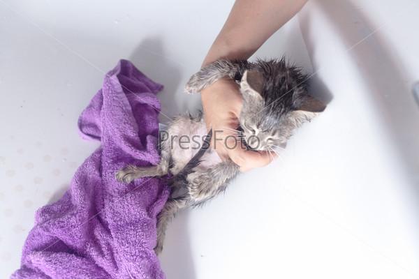 Мокрая кошка в полотенце после купания