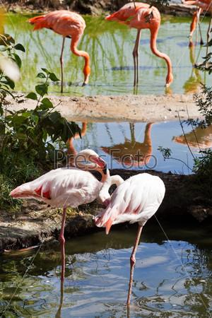 Фламинго на открытом воздухе