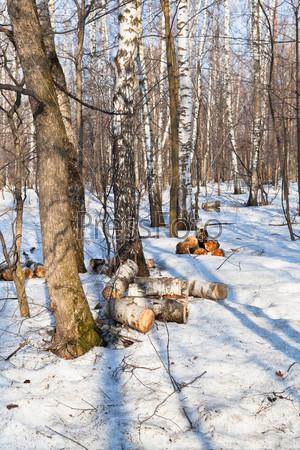 Заготовка дров весной