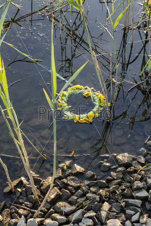 Фотография на тему Венок из одуванчиков в воде