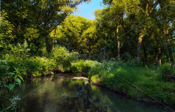 Фотография на тему Река в живописном лесу