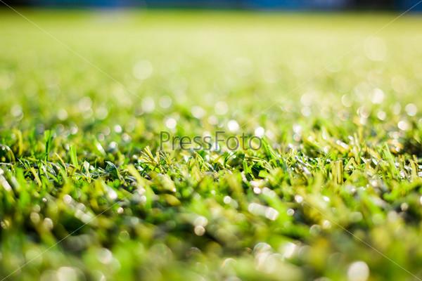 Фотография на тему Синтетическая трава