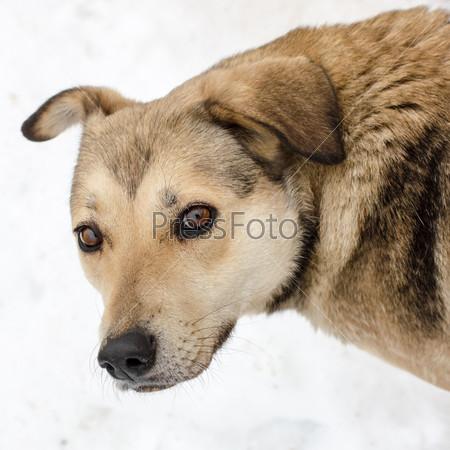 Портрет собаки с карими глазами