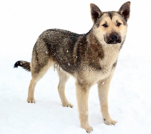 Бездомная собака в снегу