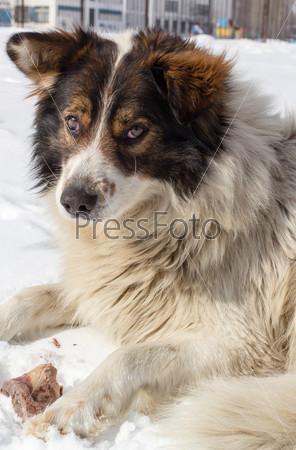 Фотография на тему Собака с костью в снегу
