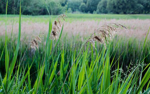 Фотография на тему Высокая трава