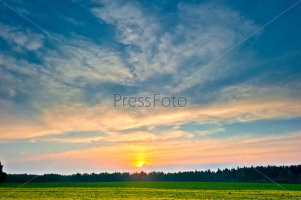 Красивый восход солнца над летним лесом