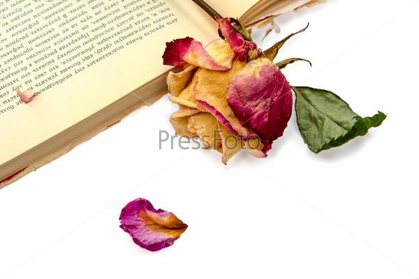 Фотография на тему Закладка в старой книге, сухая роза, изолированная на белом фоне