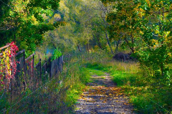 Дорога в парке с осенними листьями в солнечном свете и деревья с цветными листьями