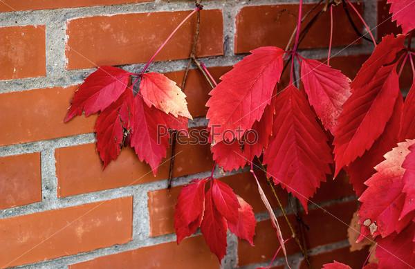 Фотография на тему Красные листья и красный кирпич