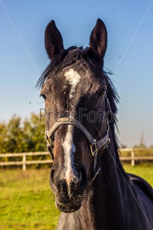 Фотография на тему Чистокровная лошадь