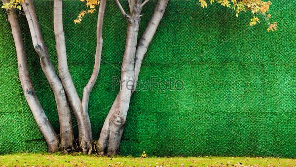 Фотография на тему Осенние деревья на фоне зеленой стены