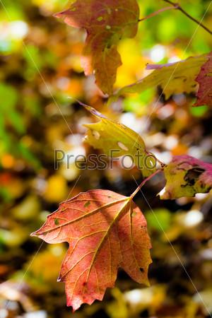 Фотография на тему Красочные осенние листья