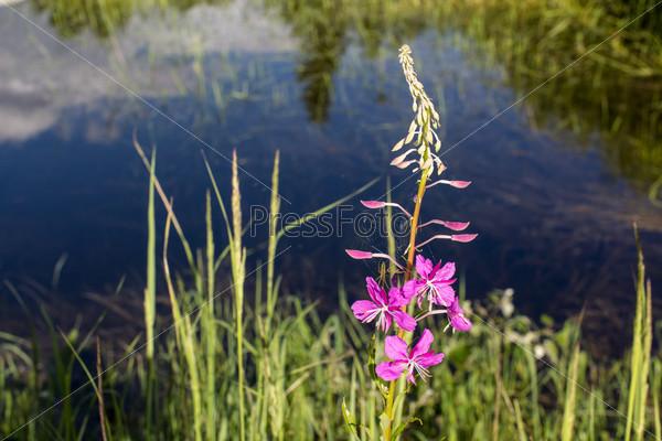 Яркие полевые цветы в болоте