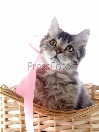 Фотография на тему Кошка с желтыми глазами и розовым бантом в плетеной корзине