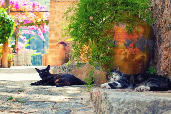 Кошки в деревне Дейя