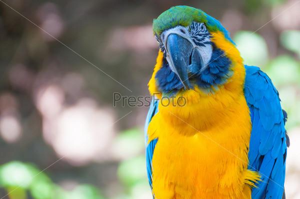 Фотография на тему Сине-желтый ара