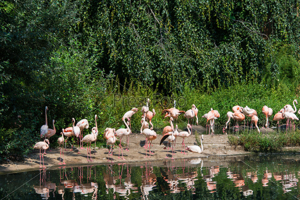 Фотография на тему Розовые фламинго в яркий летний день