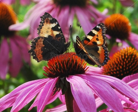 Фотография на тему Танец на цветке