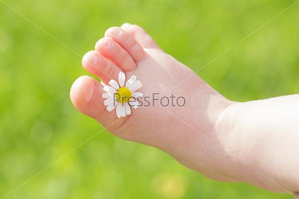 Белая ромашка между пальцами детской ноги