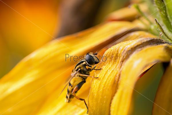 Фотография на тему Пчела собирает пыльцу с цветка