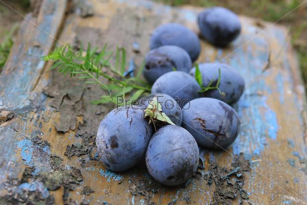 Синие сливы в старом саду