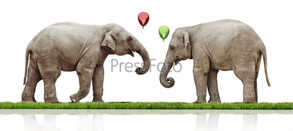 Фотография на тему Пара слонов
