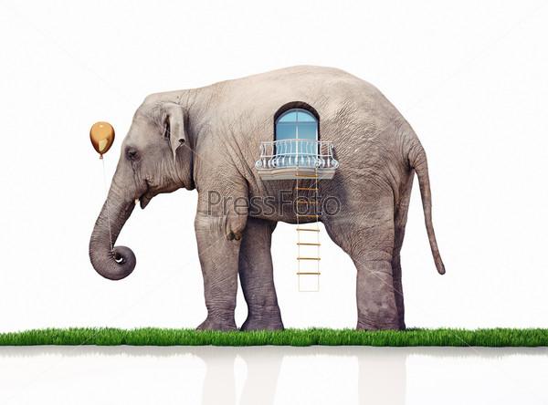 Фотография на тему Слон как дом