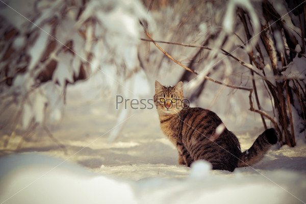 Фотография на тему Кошка на снегу
