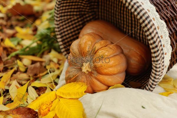 Фотография на тему Собранные тыквы с осенними листьями