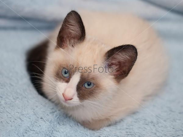cat vet questions