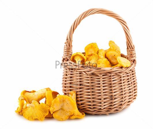 Лесные грибы лисички