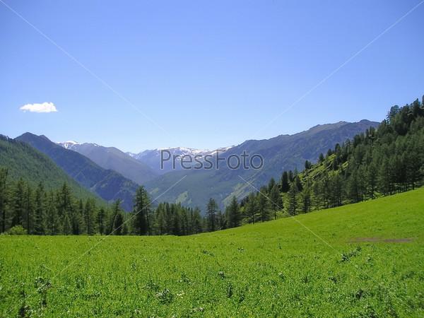 Фотография на тему Алтайские горы в солнечный летний день
