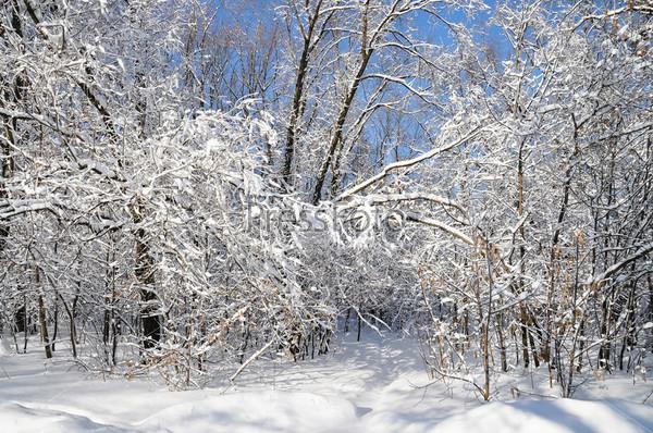 Фотография на тему Зима