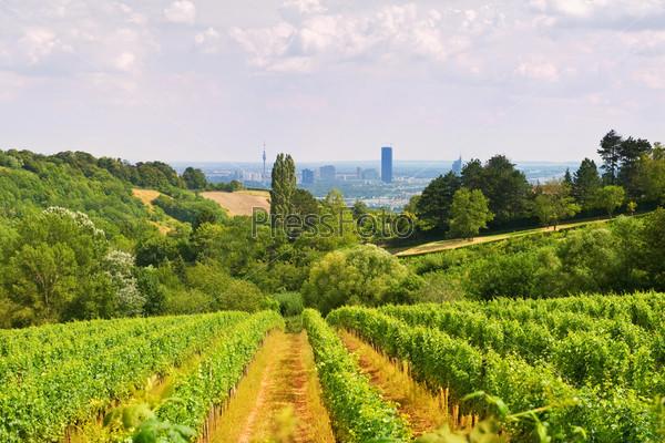 Венский виноградник