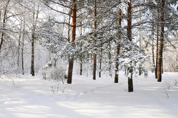 Фотография на тему Зима в парке