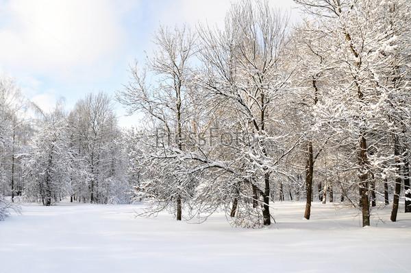Фотография на тему Зима в лесу