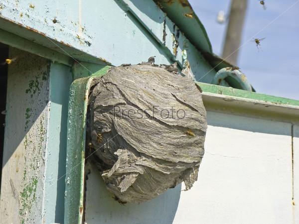 Фотография на тему Осиное гнездо
