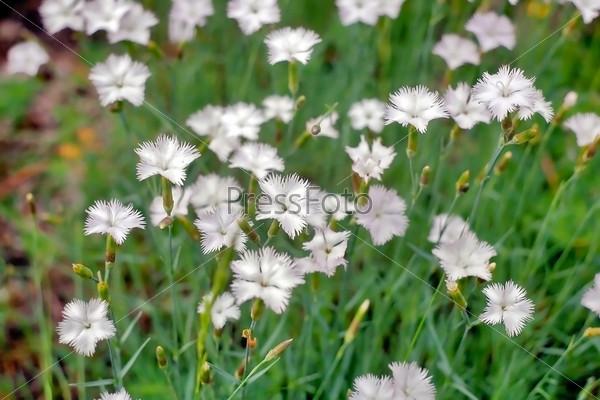 Фотография на тему Луговые цветы