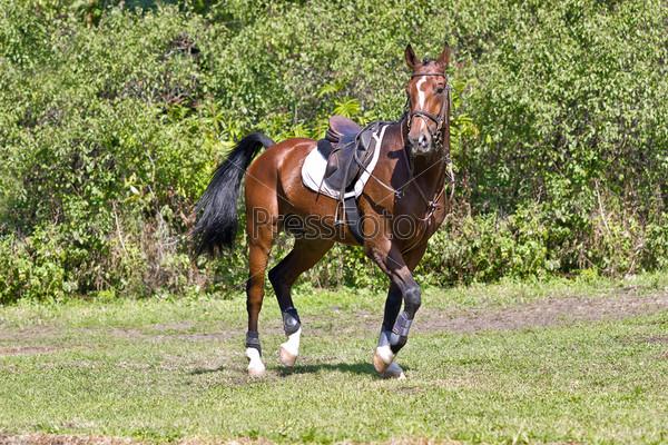 Гнедая лошадь с седлом
